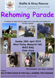 staffie rehoming parade